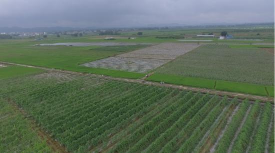 """广西贺州:做强现代农业 打造粤港澳大湾区高品质""""菜篮子"""""""