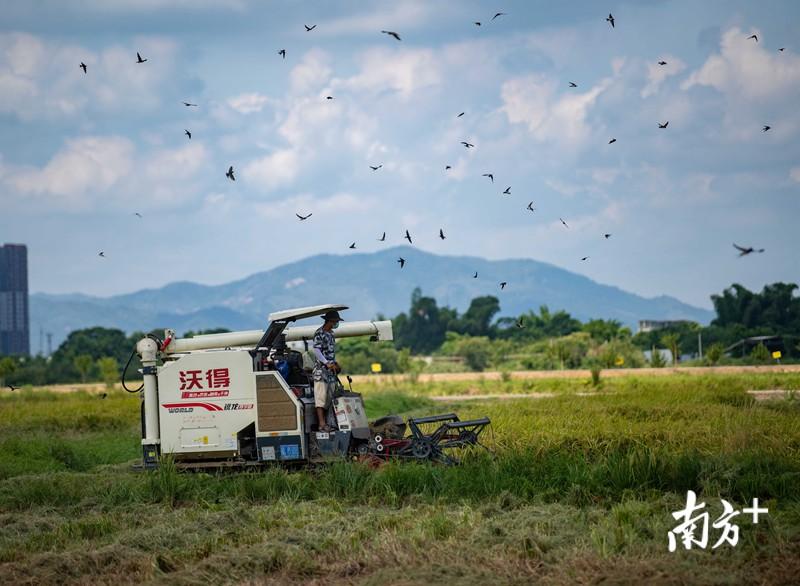 """一季水稻带来收入超百万元!土地如何转出""""致富经""""?"""