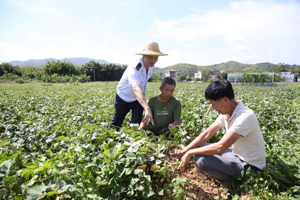 扶志更扶智!梅州丰顺税务精准施策助力贫困村走上致富路